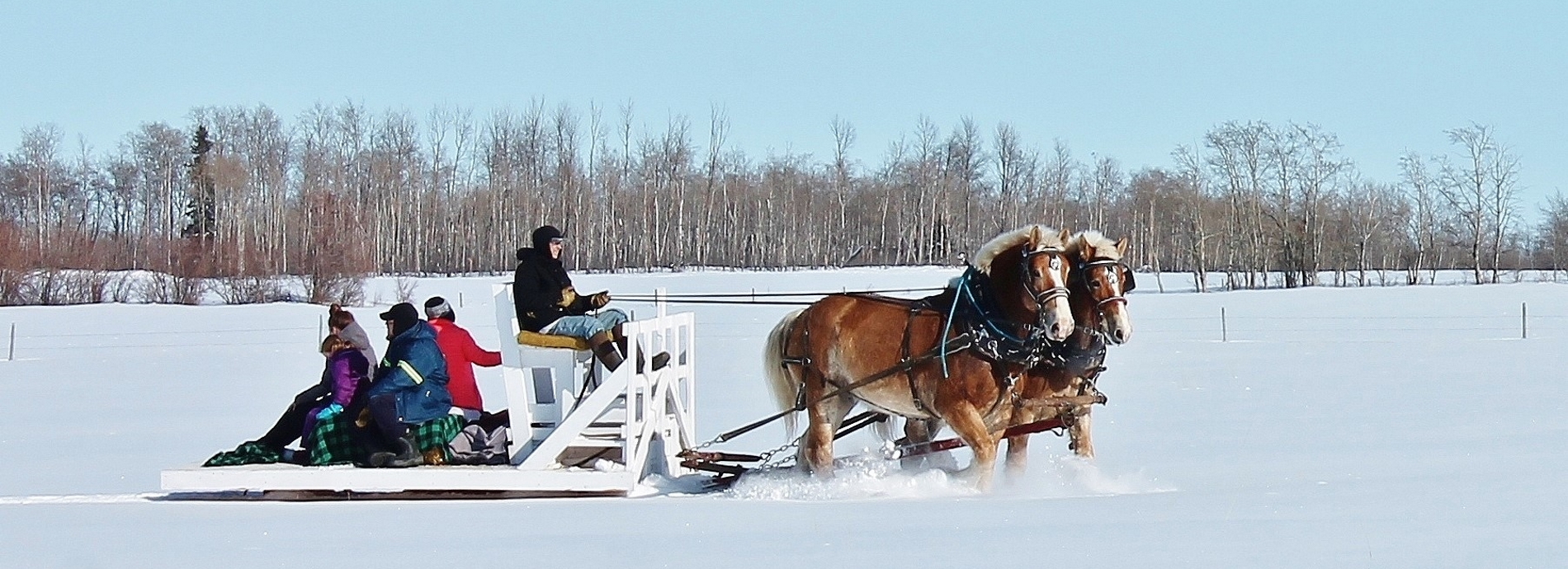 a family getting a horse drawn sleigh ride