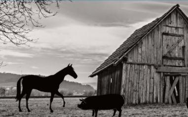 Photo of Barn and farm animals