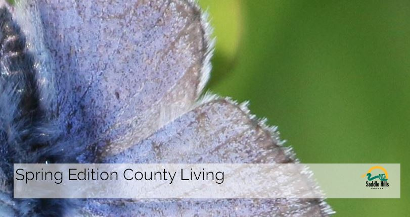 Image of County Living Cover