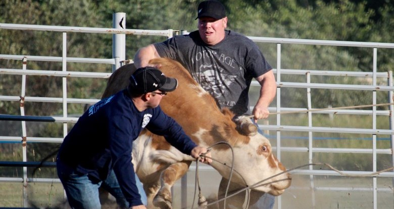 Rodeo guys tackling steer